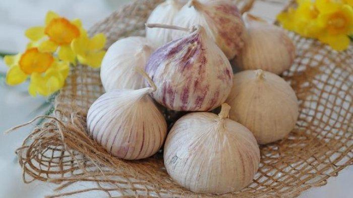 Manfaat Bawang Putih Tunggal, Bisa Cegah Kanker dan Diabetes Loh