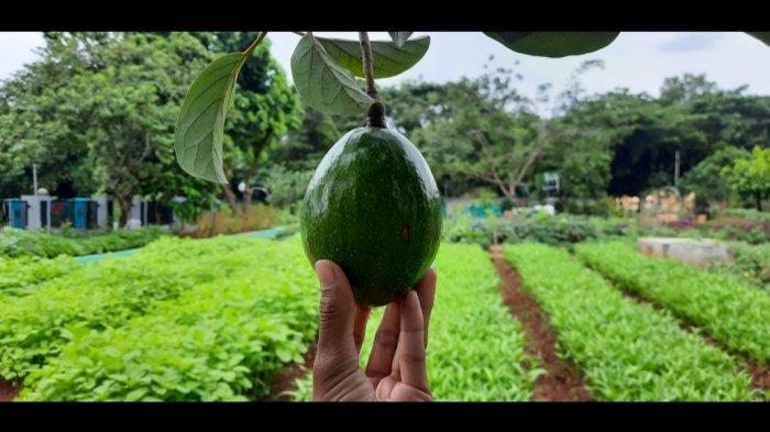 Ingin Mengenal Berbagai Jenis Tanaman Herbal dan Khasiatnya, Datang Aja ke Agro Eduwisata Ragunan