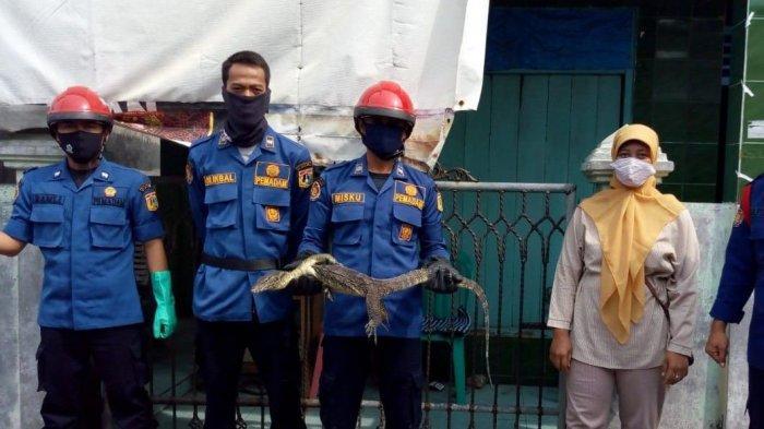 Masuk Kamar Mandi, Seekor Biawak Bikin Heboh Warga di Pulau Tidung