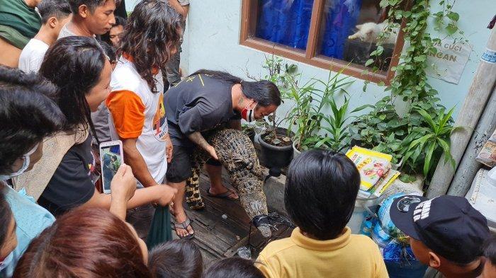 Majid mengangkat buaya yang ditemukan di gang RT 006 RW 006 Duri Selatan, Jakarta Barat pada Sabtu (24/7/2021).