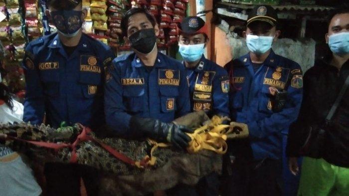 Petugas Pemadam BawaBuaya yang Ditemukan Warga Tambora dari Selokan ke BKSDA