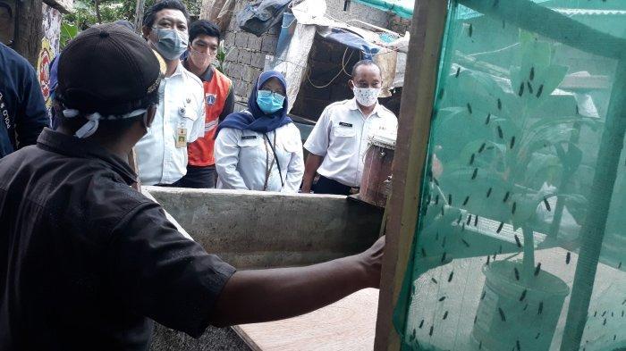 Budidaya Maggot untuk Pakan Ikan Lele, Warga Tanjung Barat Berbagi Inspirasi ke Kelurahan Ciganjur