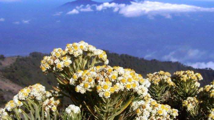 Pendaki Wanita yang Petik Bunga Edelweis di Gunung Lawu Minta Maaf, Dihukum Push Up dan Diblacklist