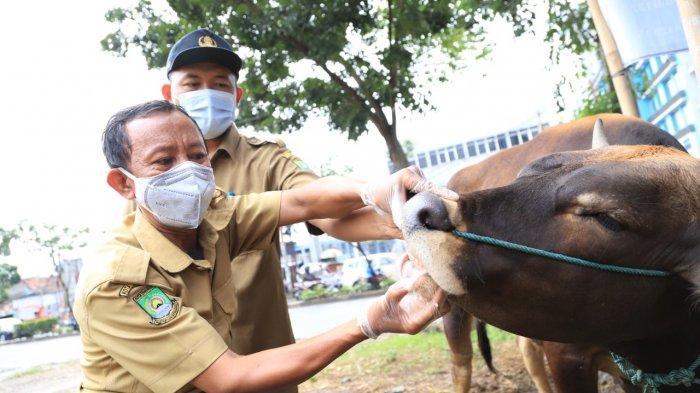 Persiapan menyambut Hari Raya Iduladha, Pemerintah Kota Tangerang mulai memeriksa kesehatan hewan kurban, Selasa (29/6/2021).