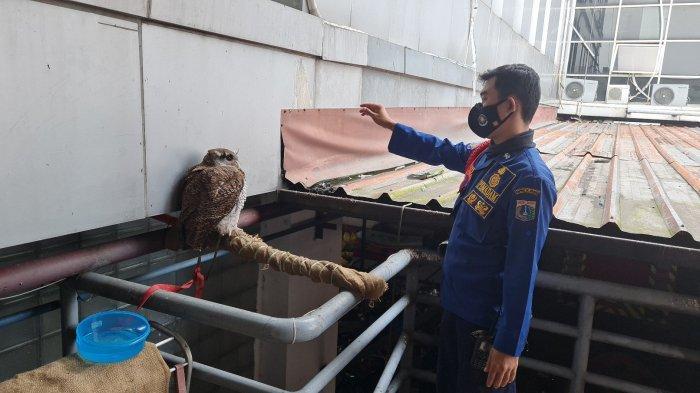 Burung Hantu Tersangkut Penangkal Petir di Pondok Indah, Damkar Bergerak Cepat Langsung Evakuasi