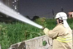 Warga Duren Sawit Diserang Ulat Bulu, Personel Pemadam Kebakaran Semprot Cairan Pembasmi