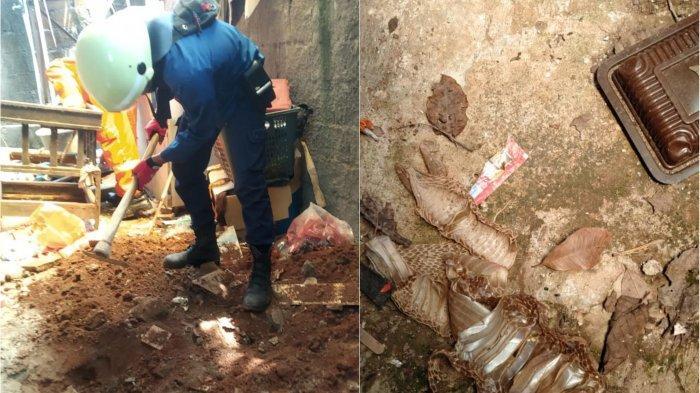 Puluhan Telur Ular Kobra Ditemukan di Gudang Rumah di Bekasi, Ada Sisik Ular dan Lubang Mencurigakan