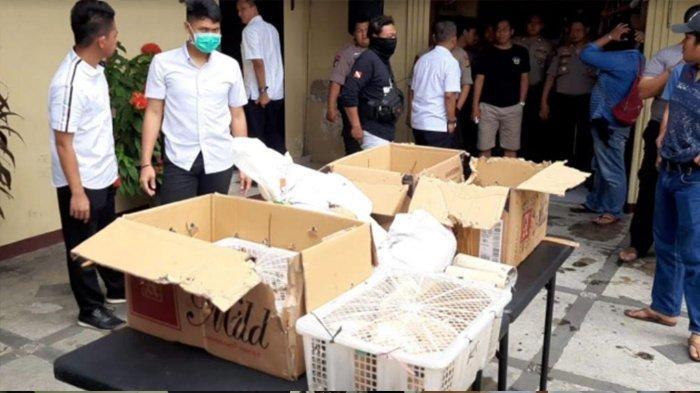 Ditpolairud Polda Metro Jaya Gagalkan Penyelundupan Burung Dilindungi dari Papua