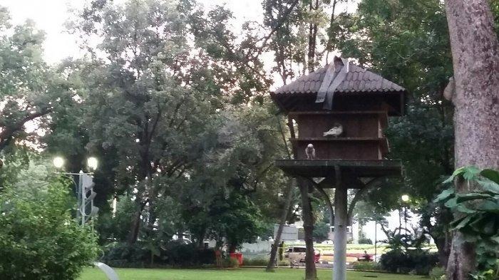 Liburan Hemat di Jakarta saat Akhir Pekan? Coba 7 Aktivitas Seru di Taman Suropati