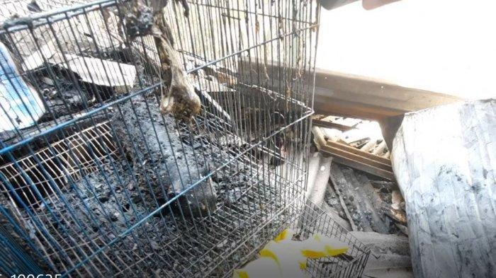 Dua ekor kucing juga menjadi korban kebakaran yang melanda permukiman penduduk di Jalan Pisangan Baru III, Matraman, Jakarta Timur pada Kamis dinihari (25/3/2021).