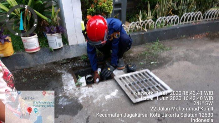 Petugas Damkar Gunakan Obat Nyamuk Semprot Evakuasi Biawak Bersembunyi di Gorong-gorong Rumah Warga