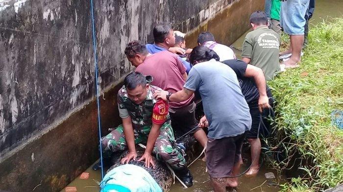 Puluhan Orang Evakuasi Buaya Pemangsa Kepala Laboratorium: Gigi Sempat Patah