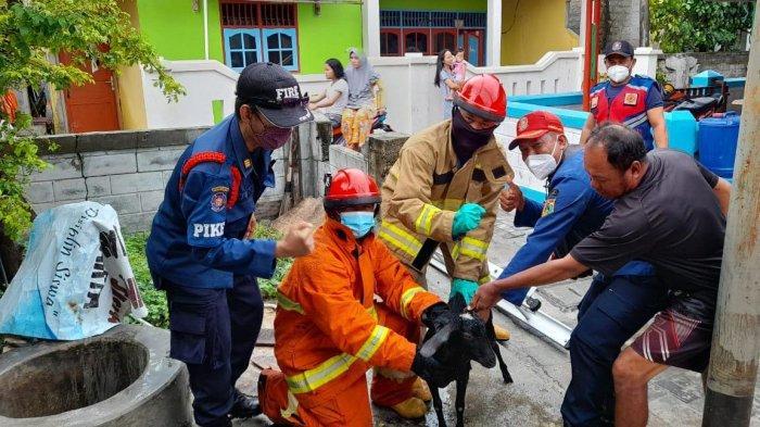 Seekor Kambing yang Terperosok ke Sumur Warga di Pulau Panggang Berhasil Dievakuasi Petugas Damkar