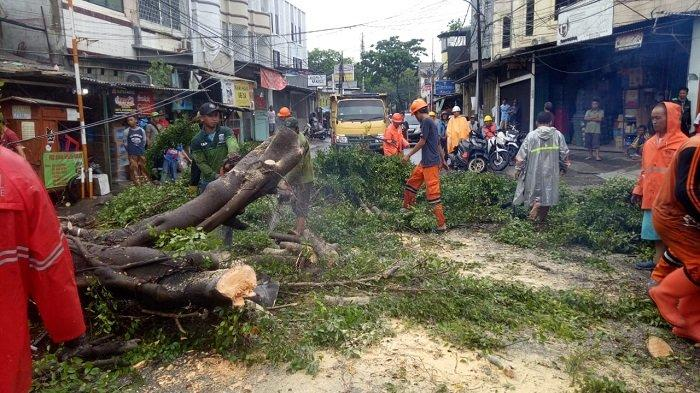 Pohon Tumbang di Grogol Timpa Kabel dan Tutup Jalan