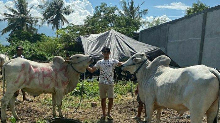 Rayakan Iduladha di Tanah Kelahiran, Gelandang Persija Jakarta Sandi Darma Sute Kurban 2 Ekor Sapi