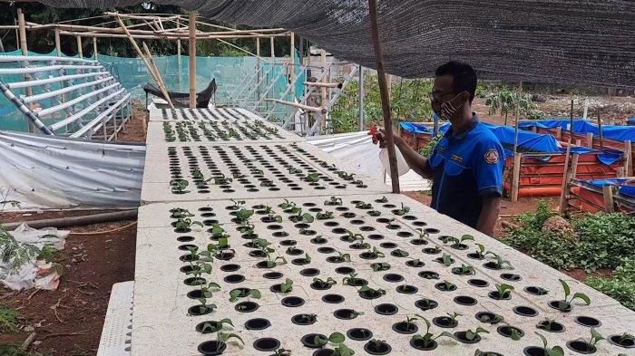Green House Pusaka, lahan tempat budidaya hidroponik, lele dan unggas yang dikelola Karang Taruna Pusaka RW07, Kelurahan Medan Satria, Kota Bekasi.