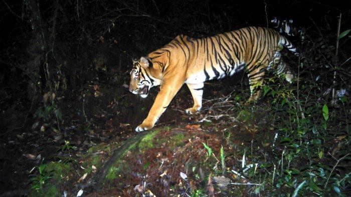 Aksi Mengeluarkan Taman Nasional Kerinci Seblat dari Daftar Terancam Warisan Dunia
