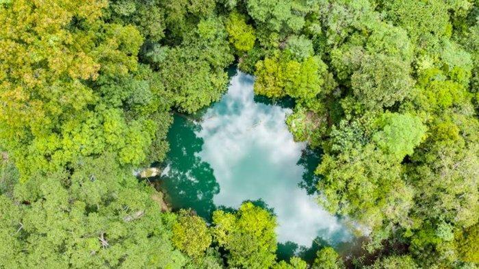 Dukung Hutan Lestari, The Baker Hughes Foundation Hibahkan USD 250 Ribu pada The Nature Conservancy