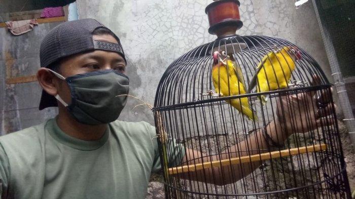 Gaji Dipotong Imbas Pandemi, Ichsan Jual Love Bird Tambah Pemasukan: Bird Berawal dari Hobi