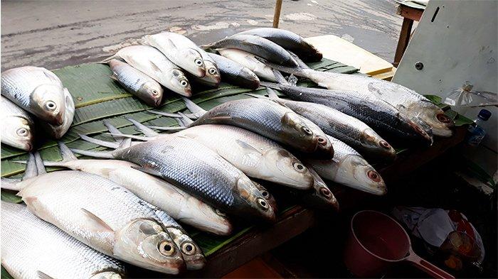Jelang Imlek Pedagang Ikan Di Pasar Ciputat Raup Untung Besar