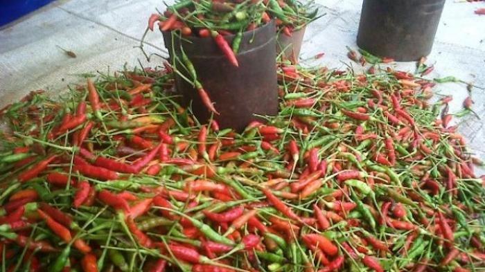 Jelang Lebaran Harga Cabai Rawit Merah Dan Daging Ayam Broiler Di Tangerang Naik Tribun Jakarta