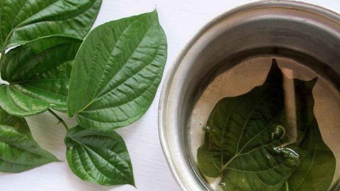 Cara Alami Hilangkan Bau Ketiak dengan 8 Ramuan Tradisional Herbal, Apa Saja?