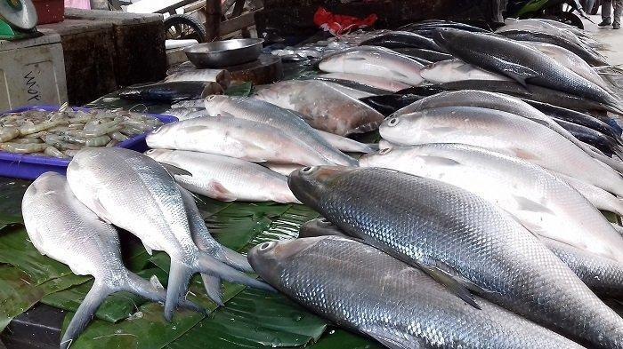 Waduh, Ribuan Ikan di Waduk Jatiluhur Mati Mendadak, Apa Penyebabnya?