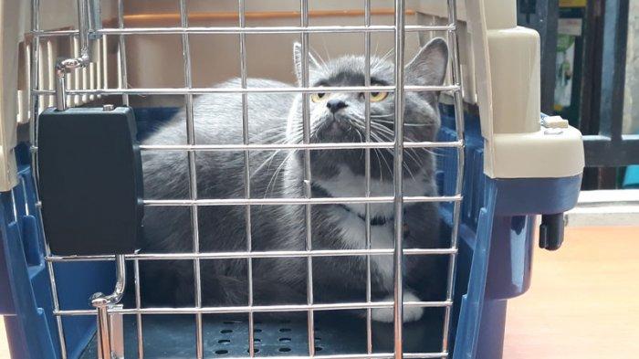 Cara Ampuh Mengusir Kucing sehingga Tidak Perlu Menyiksa Kucing, dari Siram Air hingga Beri Bau