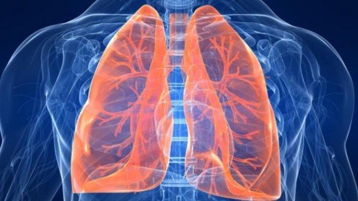 Daftar Bahan Alami Berkhasiat Jaga Kesehatan Paru-paru Bila Rutin Dikonsumsi