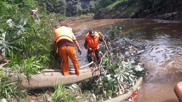 Indra (topi hitam baju hijau terang celana oren) tengah mencabuti sampah yang tersangkut di Pohon Loa di bantaran Sungai Ciliwung pada Minggu (8/11/2020).