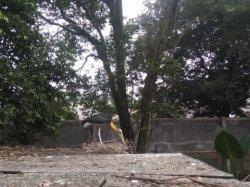 Lahir Saat Libur Lebaran, Nama Bayi Bangau Tongtong Diberi Nama Mubarok di TMII