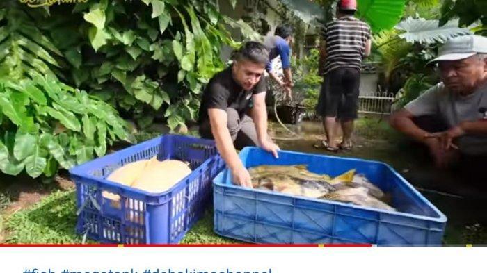 Puluhan Ikan Seharga Ratusan Jutanya Mati Masal, Irfan Hakim Berduka: Nyesek Karena Keteledoran