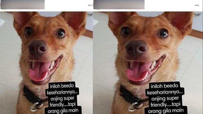Heboh Unggahan Instagram Penembakan Anjing di Tangerang, Kapolres Berikan Reaksi