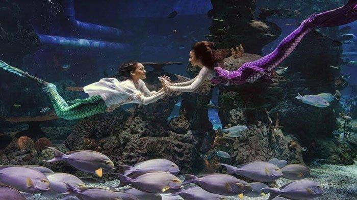 4 Pesona Jakarta Aquarium yang Membuat Anda Merasakan Keajaiban Seperti di Dalam Planet Satwa