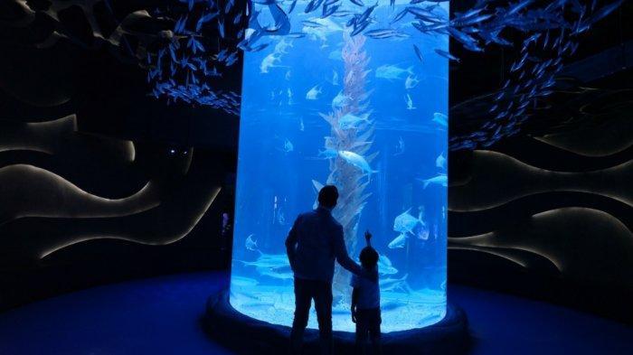 Ngabuburit Seru di Jakarta Aquarium & Safari, Bisa Dapat Harga Khusus: Cuma Bayar Rp90 Ribu