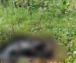 Jasad Wanita yang Hangus di Cisauk Ditemukan Masih Dalam Kondisi Berasap