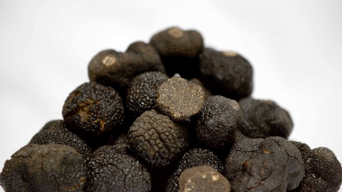 jamur truffle hitam