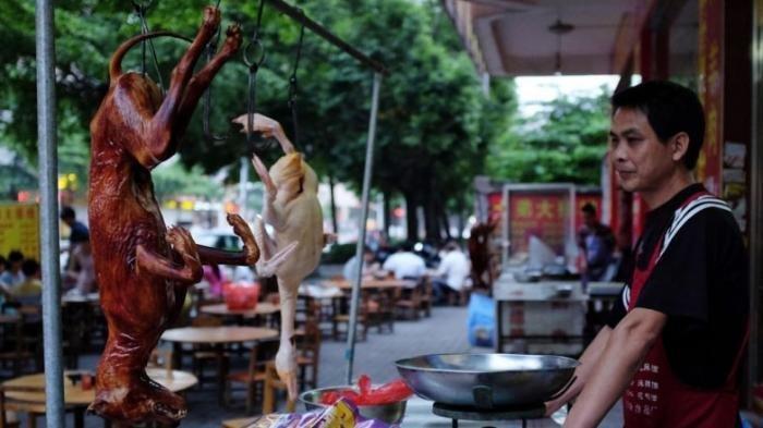 Koalisi DMFI: Banyak Perdagangan Daging Anjing Ilegal, 340 Ekor Dipotong Setiap Hari di Jakarta