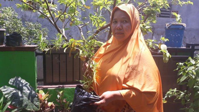 Pernah Duduki Kasus DBD Terbanyak, Warga Cipayung Jakarta Timur Kini Tanam Lavender