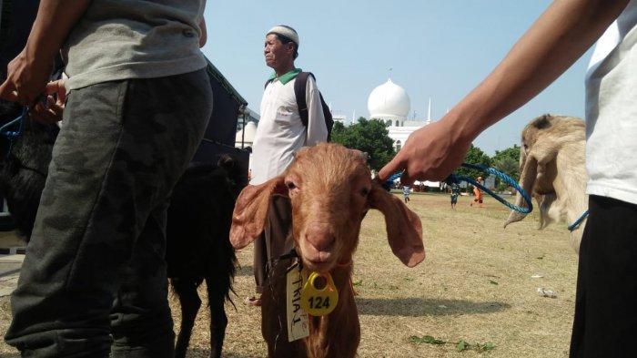Teror Puluhan Kambing Diterkam Ajag, Kenali Anjing Hutan Langka Asli Indonesia yang Terancam Punah
