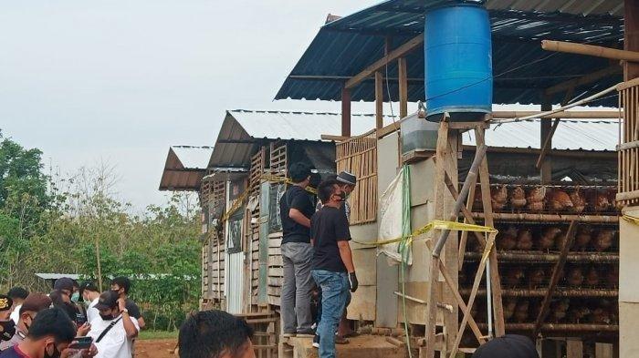 Penampakan bisnis ayam dengan kandang berjajar cukup besar dan mentereng milik Eko pembunuh Yulia di Dusun Ngesong, Desa Puhgogor, Kecamatan Bendosari, Kabupaten Sukoharjo, Senin (26/10/2020).