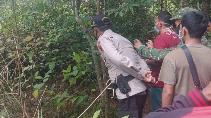 Dililit Sanca 3 Meter, Tubuh Marinding Menghitam di Hutan Setelah Hilang 4 Hari