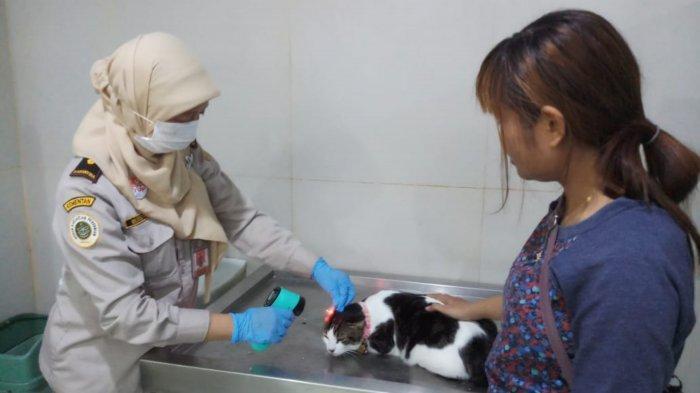 Angka Kematian Rabies Tinggi, Pengawasan Hewan Peliharaan di Bandara Soekarno-Hatta Diperketat