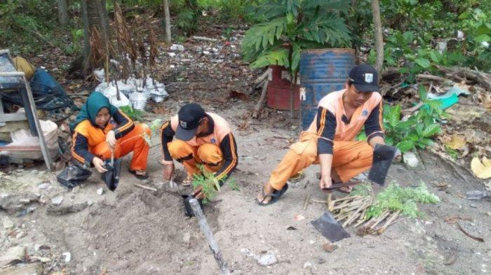 Pembibitan Daun Kelor di Pulau Tidung Manfaatkan Pupuk dari Sampah dan Air Bekas AC