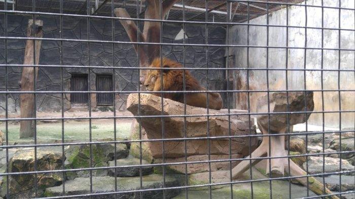 Terima Bantuan Apapun, Kebun Binatang Bandung Berencana Jadikan Rusa dan Angsa Sebagai Pakan