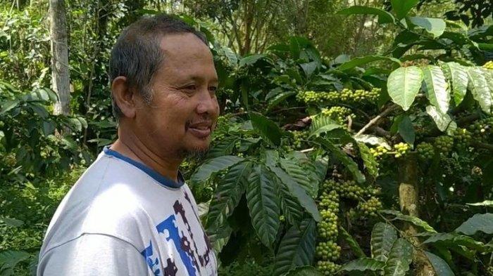 Cerita Petani Kopi di Lereng Gunung, Ada Berkah Tersembunyi di Balik Erupsi Merapi