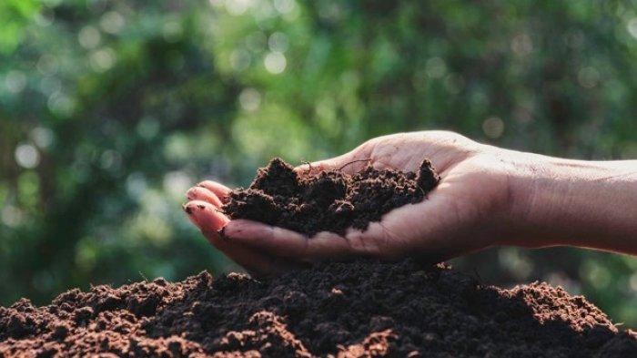 Peringati Hari Bumi, Yuk Catat Cara Membuat Kompos Sampah Organik