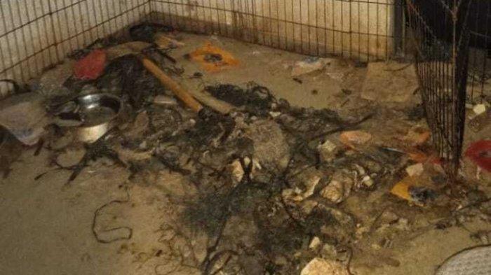 Kondisi rumah tempat penelantaran anjing di Serpong Utara