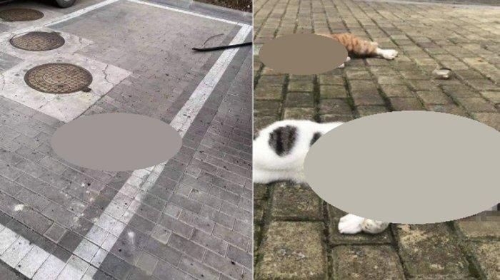 Pemiliknya Takut Tertular Virus Corona, Viral Foto Kucing dan Anjing di China Dilempar dari Jendela
