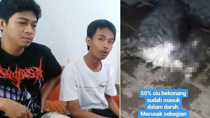 Cerita Dibalik Viral Video Kucing Mati Dicecoki Ciu, Kuburan Dibongkar, Pemilik Akun Diserang Teror
